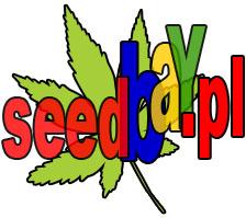 nasiona marihuany, nasiona konopi, seedbay