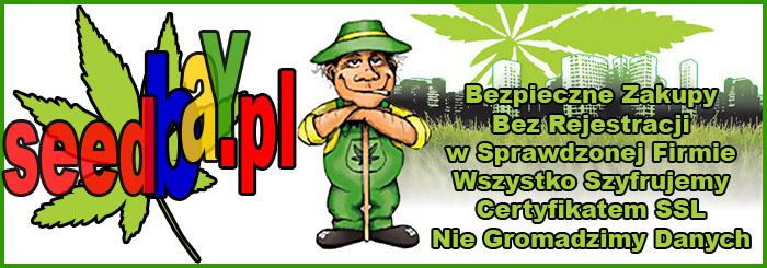 nasiona marihuany, konopi, bezpieczne, zakupy, szyfrowanie, certyfikat, ssl