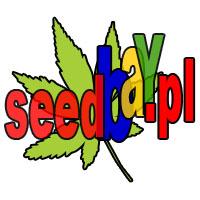 nasiona marihuany, konopi, cannabis, trawki, ganji, auto, skun, skunk, ak47, sklep