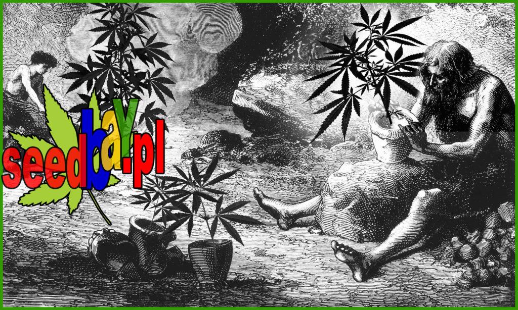 Cannabis, CBD, Konopie, Marihuana, THC