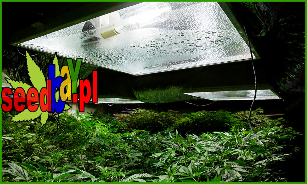 Oświetlenie, Wyposażenie Dodatkowe, Wysięgnik, Materiały Odbijające, Uprawa Konopi, Uprawa Marihuany
