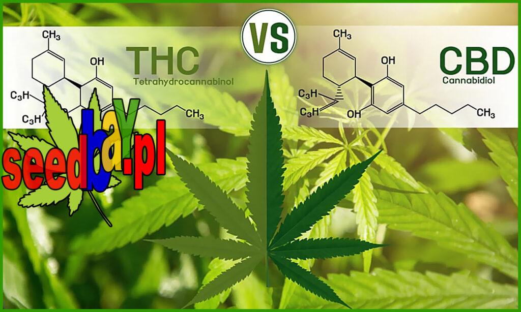 thc i cbd legalność, różnice między nimi